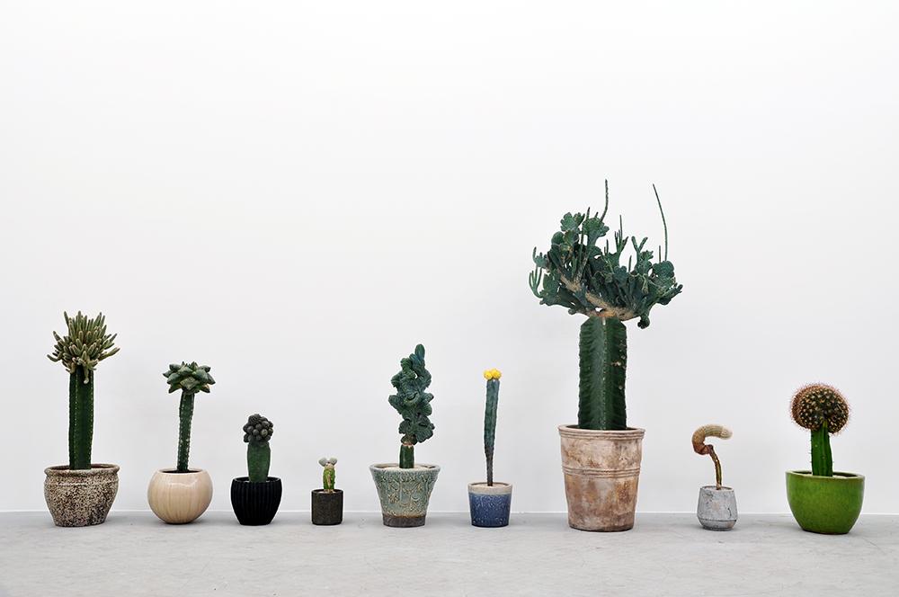 植物屋「叢-Qusamura」 × familiar 驚きと不思議にあふれたサボテンの接ぎ木の世界が楽しめる|familiar